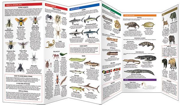 Dangerous Animals & Plants