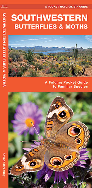 Southwestern Butterflies & Moths