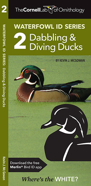 Cornell Lab of Ornithology Waterfowl ID 2 Dabbling & Diving Ducks, The