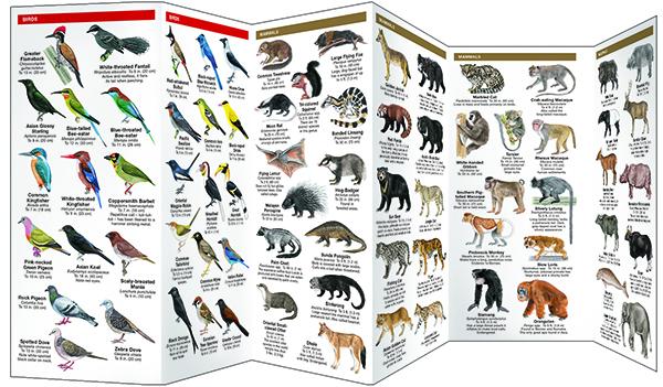 Southeast Asia Wildlife