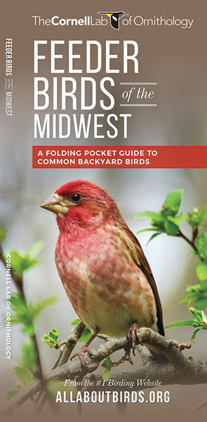 Feeder Birds of the Midwest