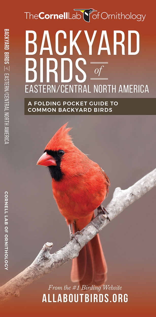 Backyard Birds of Eastern/Central North America