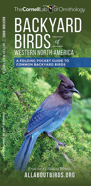 Backyard Birds of Western North America