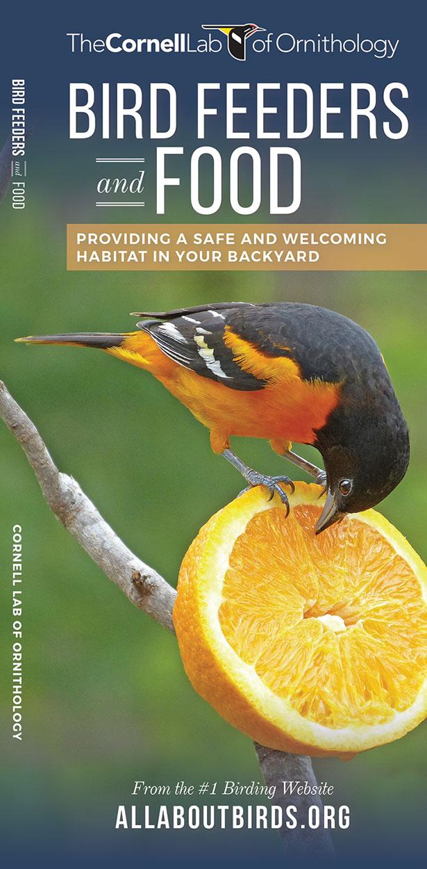 Bird Feeders and Food