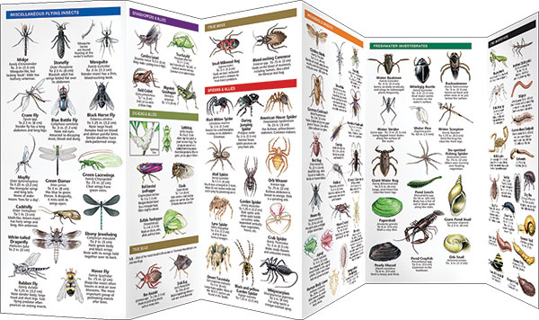 Bugs & Slugs