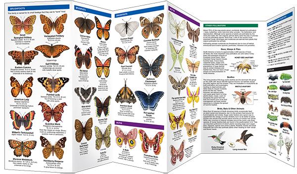 Butterflies & Pollinators