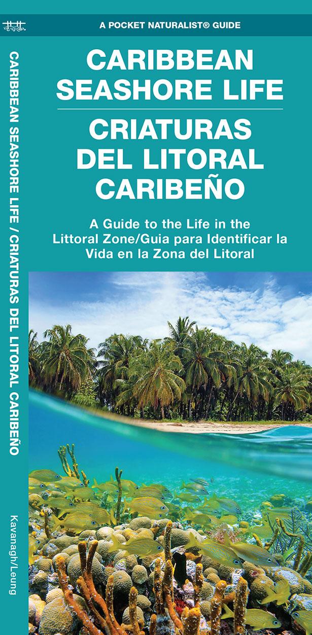 Caribbean Seashore Life / Criaturas Del Litoral Caribeño